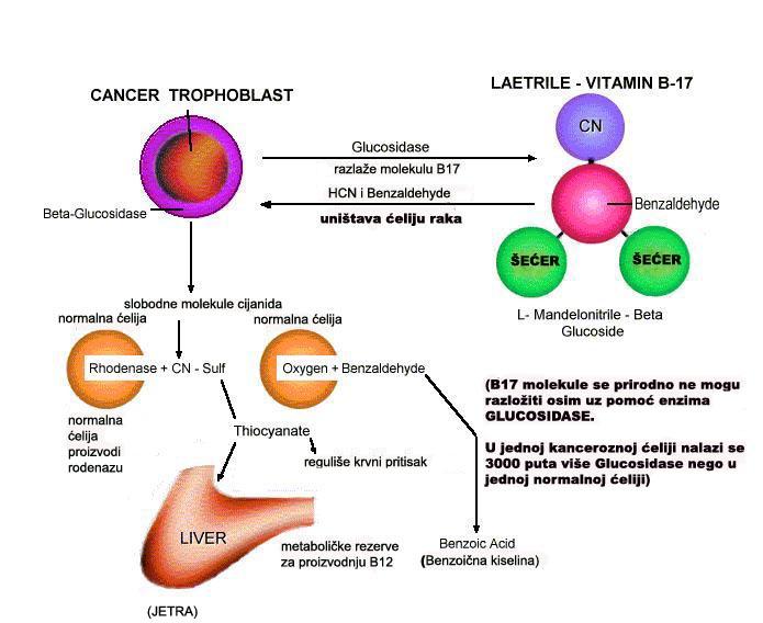 Lijek za rak ? Vit_B17_sema